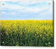 Acrylic Print featuring the photograph Blooming Canola - Photography by Ann Powell