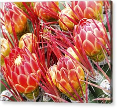 Blooming Acrylic Print by Eric Foltz