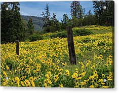 Blooming Fence Acrylic Print