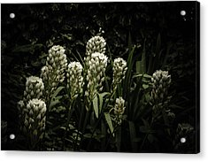 Acrylic Print featuring the photograph Blooming In The Shadows by Marco Oliveira