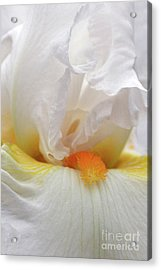 Blooming Iris Beauty Acrylic Print