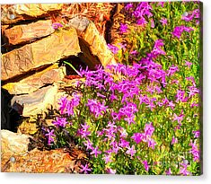 Blooming Acrylic Print by Judy  Waller
