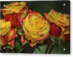 Oh My God It's Another  Rose Image Acrylic Print by Betsy Knapp
