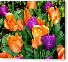 Acrylic Print featuring the photograph Blooming Multitude by Lynda Lehmann