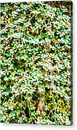 Blooming Shrubs  Acrylic Print