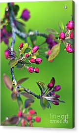 Acrylic Print featuring the photograph Blooming Spring Poetry by Silva Wischeropp