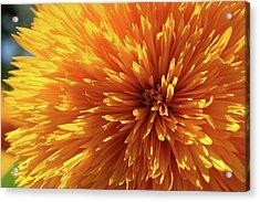 Blooming Sunshine Acrylic Print