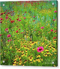 Acrylic Print featuring the photograph Blooming Wildflowers by D Davila