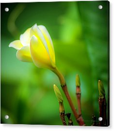Blooming Yellow Acrylic Print by Marvin Spates