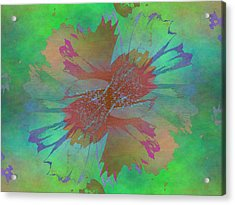 Blooms In The Mist Acrylic Print by Tim Allen
