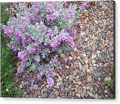 Blooms Acrylic Print by Mordecai Colodner