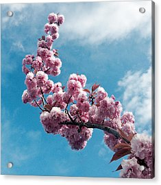 Acrylic Print featuring the photograph Blossom Impressions by Gwyn Newcombe