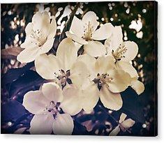 Blossom Acrylic Print by JAMART Photography