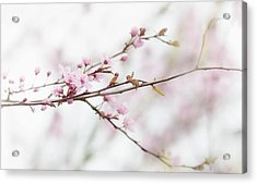Acrylic Print featuring the photograph Blossom Pink by Rebecca Cozart