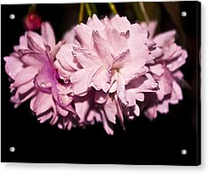 Blossom Acrylic Print by Svetlana Sewell