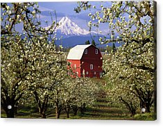 Blossom Time Acrylic Print by Eggers Photography