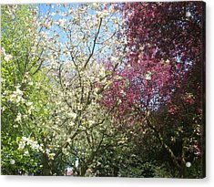 Acrylic Print featuring the painting Blossom Trio by Judith Desrosiers