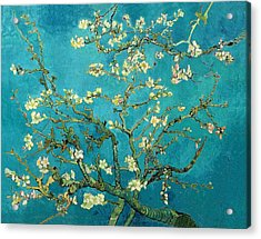 Acrylic Print featuring the painting Blossoming Almond Tree by Van Gogh