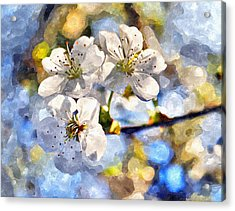 Blossoming Cherry And Morning Sunlight Watercolor Acrylic Print