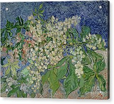 Blossoming Chestnut Branches Acrylic Print by Vincent Van Gogh