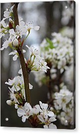 Blossoming Flowers Acrylic Print