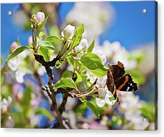 Blossoms And Butterfly Acrylic Print