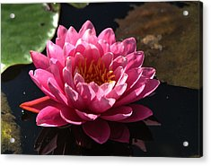 Blossoms And Lily Pads 4 Acrylic Print