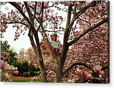 Blossoms At The Castle Acrylic Print by Frank Garciarubio