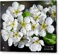 Acrylic Print featuring the photograph Blossoms by Elvira Ladocki