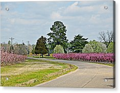 Blossoms Everywhere Acrylic Print