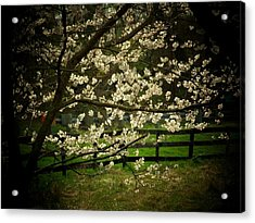Blossoms Fence Acrylic Print by Michael L Kimble