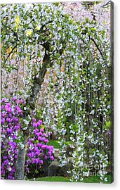 Blossoms Galore Acrylic Print by Carol Groenen