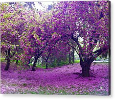 Blossoms In Central Park Acrylic Print