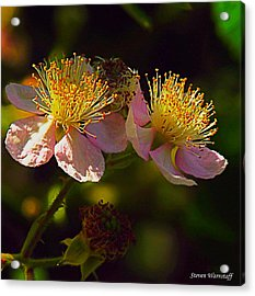 Blossoms.1 Acrylic Print