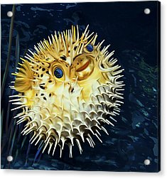 Blowfish Acrylic Print
