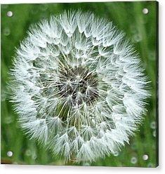 Blowin' In The Wind Acrylic Print