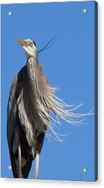 Acrylic Print featuring the photograph Blowing In The Wind by Jeanne Kay Juhos