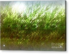 Acrylic Print featuring the photograph Blowing In The Wind by John Krakora