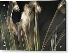 Acrylic Print featuring the photograph Blowing In The Wind by Roger Mullenhour