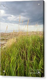 Blown By The Wind Acrylic Print