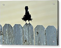 Acrylic Print featuring the photograph Blows Your Skirt Up by Teresa Blanton