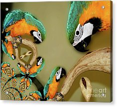 Blue And Gold Macaw Parrot Abstract Acrylic Print
