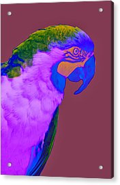 Acrylic Print featuring the photograph Blue And Gold Macaw Sabattier by Bill Barber