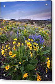Blue And Gold Acrylic Print by Mike  Dawson