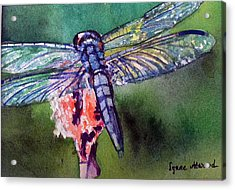 Blue And Green Dragonfly Acrylic Print