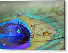 Acrylic Print featuring the photograph Blue And Orange Water Drops by Angela Murdock