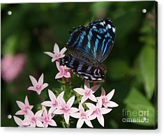 Blue And Pink Make Lilac Acrylic Print by Shelley Jones