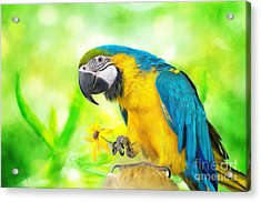 Blue And Yellow Macaw Acrylic Print