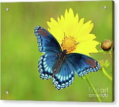Blue And Yellow On Green Acrylic Print