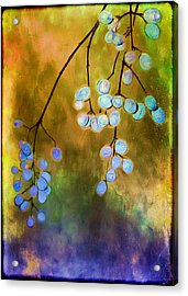 Blue Autumn Berries Acrylic Print